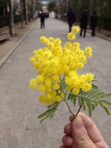 mimose-madrid